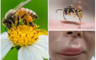 Phải làm gì nếu một con ong bị cắn trong môi