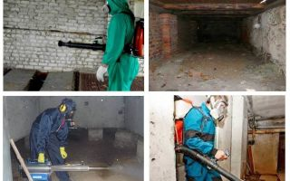 Làm thế nào để thoát khỏi bọ chét tầng hầm trong căn hộ