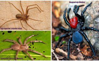 Mô tả và hình ảnh của những con nhện nguy hiểm nhất trên thế giới