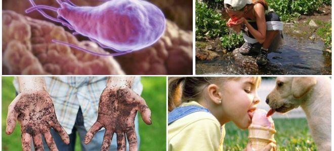 Giardia u nang trong phân của một đứa trẻ: làm thế nào họ nhìn và làm thế nào để điều trị