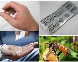 Phải làm gì nếu một con ong cắn