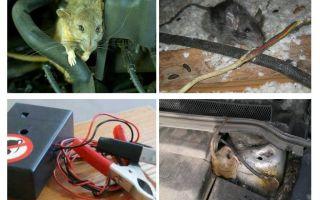 Làm thế nào để thoát khỏi những con chuột dưới mui xe