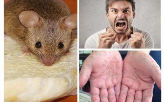 Những gì có thể bị nhiễm từ chuột