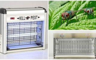 Làm thế nào để tạo bẫy cho ruồi tại nhà