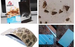 Moth bẫy thực phẩm