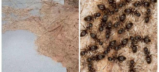 Làm thế nào để loại bỏ kiến trên mộ