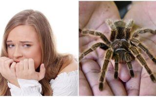 Tên của sự sợ hãi của nhện (ám ảnh) và phương pháp điều trị là gì