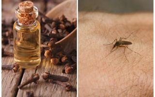 Dầu đinh hương chống muỗi