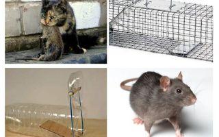 Cách đưa chuột ra khỏi nhà riêng