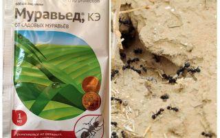 Ant khắc phục hướng dẫn và đánh giá Anteater
