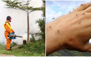 Phương tiện chế biến khu vực từ muỗi và ve