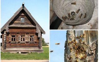 Làm thế nào để có được những con ong ra khỏi nhà gỗ và những nơi khác