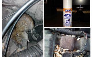 Phun chuột cho xe
