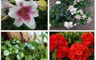 Những gì hoa sợ hãi nốt ruồi