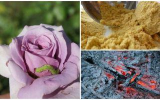 Cách phun hoa hồng từ sâu bướm và rệp