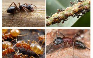 Kiến kiến và hại của kiến trúc vườn