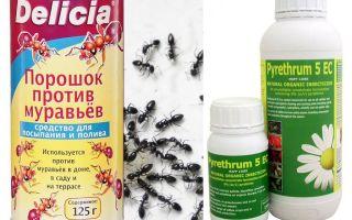 Thuốc kháng độc trong căn hộ hoặc nhà