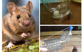 Làm thế nào để bắt một con chuột trong một ngôi nhà mà không có một cái bẫy chuột