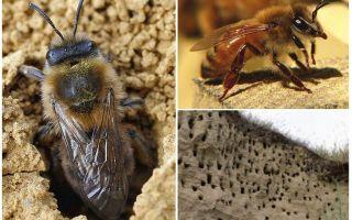 Làm thế nào để loại bỏ ong trái đất khỏi trang web
