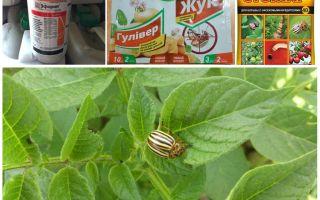 Các chất độc và chất độc hiệu quả nhất từ bọ khoai tây Colorado