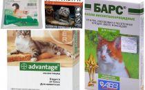 Giọt trên trán từ bọ chét cho mèo và mèo con