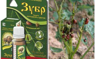 Bison độc từ bọ khoai tây Colorado