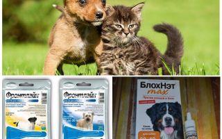 Cách thức và cách bảo vệ chó khỏi muỗi và ruồi