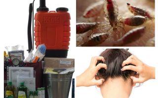 Bộ dụng cụ chống pediculosis là gì?