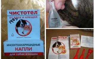 Giọt celandine từ bọ chét cho mèo và chó