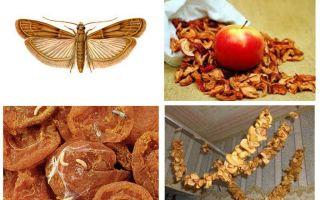 Phải làm gì nếu nốt ruồi bắt đầu trong trái cây khô