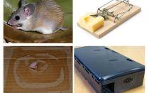 Cách tháo chuột khỏi nhà riêng