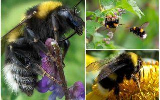 Mô tả và hình ảnh của vườn ong