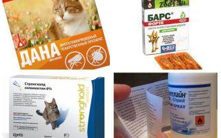Các biện pháp khắc phục bọ chét tốt nhất cho mèo