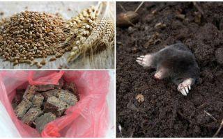 Làm thế nào và những gì để đầu độc nốt ruồi