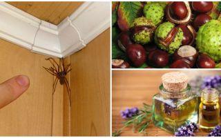 Phương pháp và công cụ cho nhện trong căn hộ hoặc nhà riêng