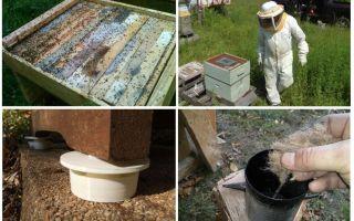 Làm thế nào để loại bỏ kiến trong các biện pháp khắc phục dân gian nhà nuôi ong