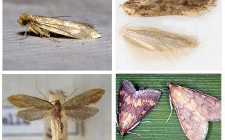 Điều gì giúp ích từ sâu bướm và ấu trùng của nó
