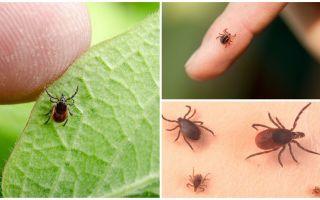 Tất cả về bọ ve