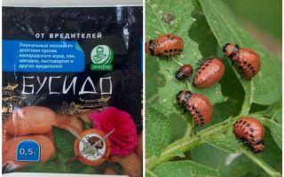 Biện pháp khắc phục cho bọ khoai tây Bushido Colorado: hướng dẫn sử dụng, hiệu quả, đánh giá