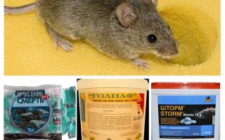 Chất độc từ chuột