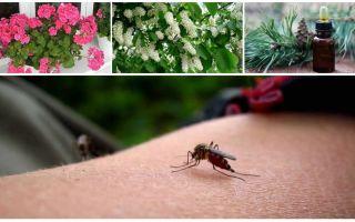 Làm thế nào để đối phó với muỗi trong một căn hộ hoặc nhà
