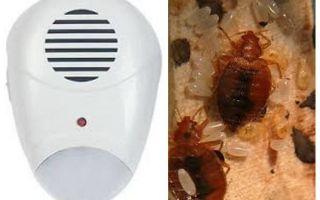 Repeller Pest Repeller từ bedbugs