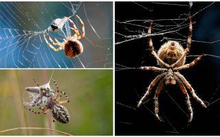 Khi con nhện dệt một trang web