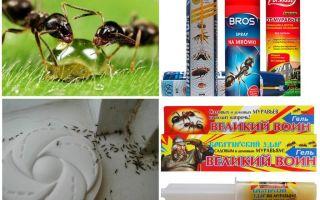 Làm thế nào để tiêu diệt kiến và kiến