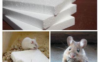 Làm chuột gặm bọt