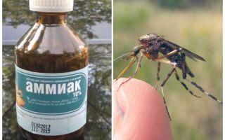 Amoniac lỏng từ muỗi