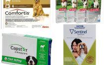 Làm thế nào để loại bỏ bọ chét ở chó, phương tiện hiệu quả nhất của bọ chét