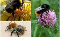 Một con ong trông như thế nào?