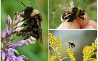 Tại sao ong không thể bay theo luật vật lý