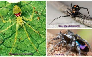 Những con nhện đẹp nhất thế giới